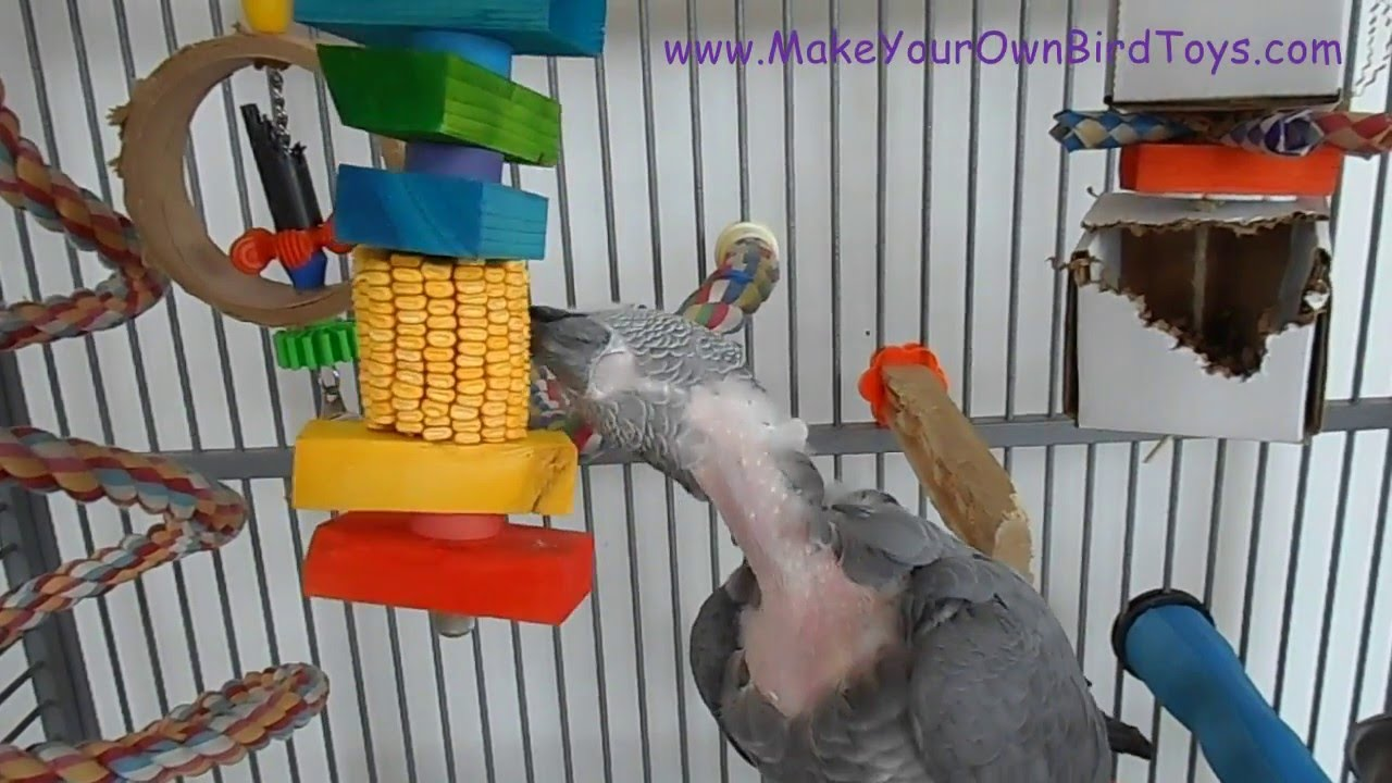 Make Your Own Bird Toys : Make your own bird toys dried ear corn youtube