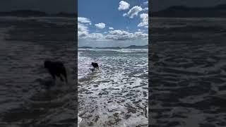 VIDEO Lady Zielinski in riva al mare col suo labrador