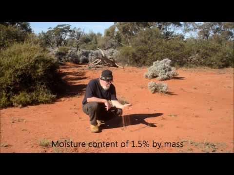 A brief look at an Australian inland burrowing scorpion- Urodacus yaschenkoi