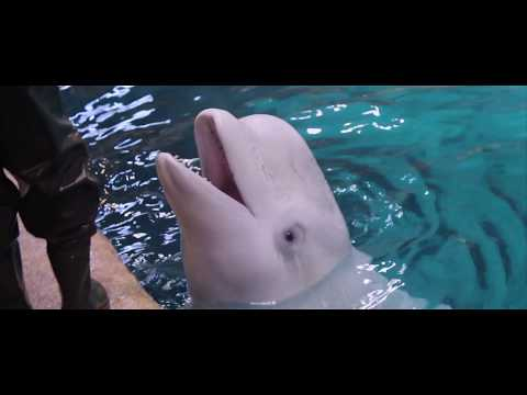 Swimming with dolphins!!!  || Travel Diary