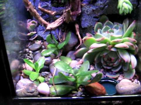 Nicest 10 Gallon Terrarium - YouTube 10 Gallon Vivarium