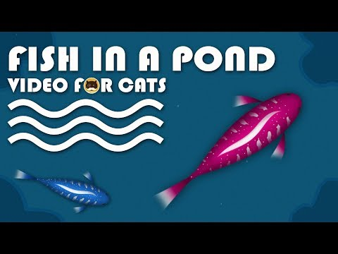 CAT GAMES - Catching Fish In A Pond! Fish Video For Cats To Watch.