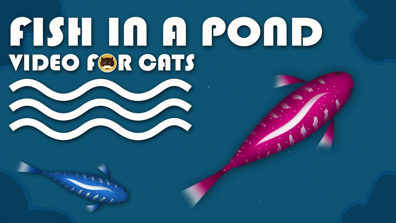 Cat games catching fish in a pond fish video for cats for Koi pond maine coon cattery