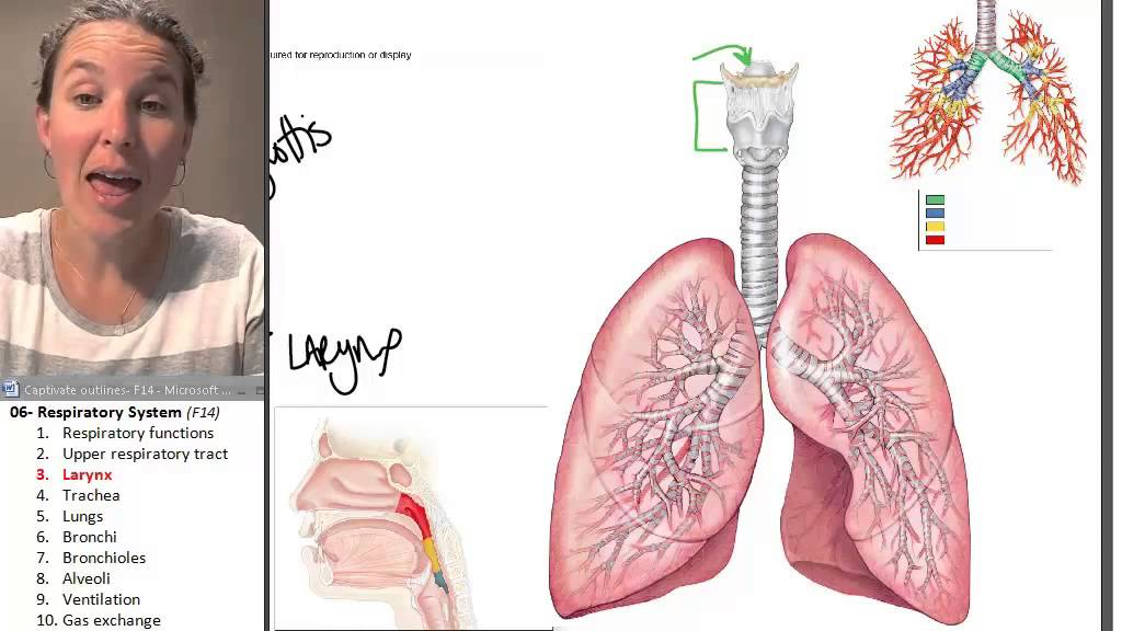 The Larynx Respiratory System Human Anatomy Course Youtube