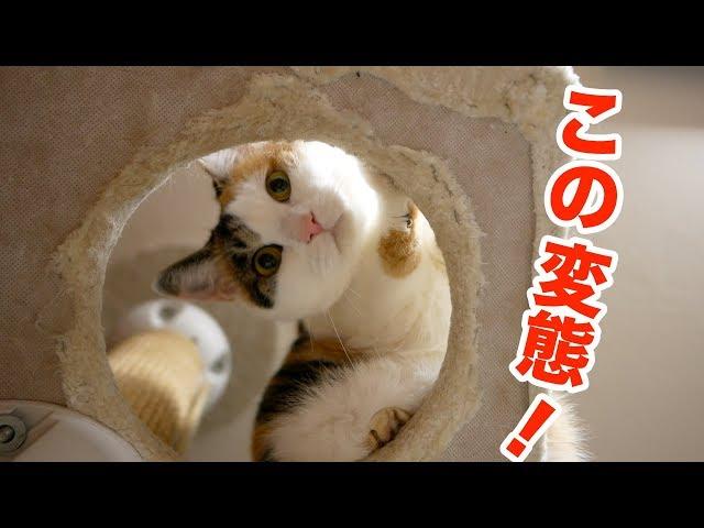 猫を下からのぞいたら変態扱いされた!(笑)