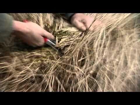 Zebragras Zurückschneiden ziergräser richtig zurückschneiden