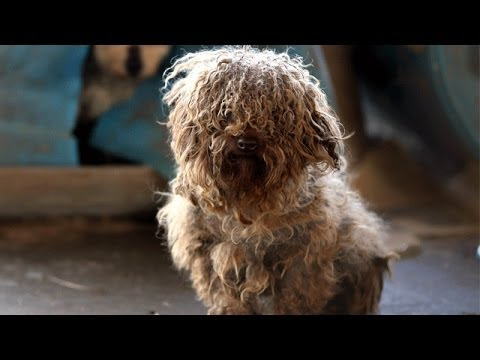 180+ Animals Rescued from Arkansas Puppy Mill