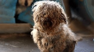 180 animals rescued from arkansas puppy mill