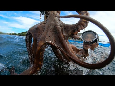 How To Catch Octopus?