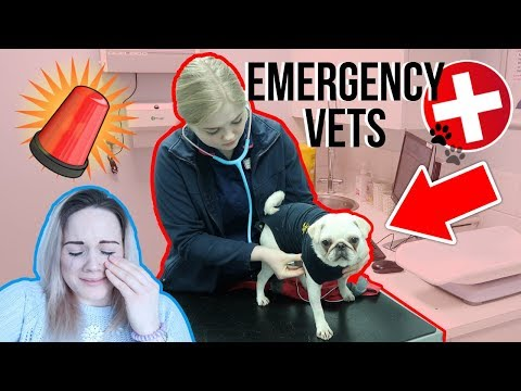 😭 SCARIEST MOMENT OF MY LIFE  EMERGENCY VETS FOR ROSE!!🐶🚨