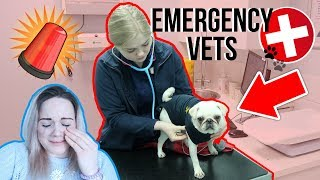 😭 SCARIEST MOMENT OF MY LIFE | EMERGENCY VETS FOR ROSE!!🐶🚨