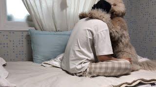 강아지 키우면 늦잠 못자는 이유