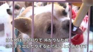 保護犬 麦茶 チワワ 『人間と動物の共生を図る社会の形成』を目的として...