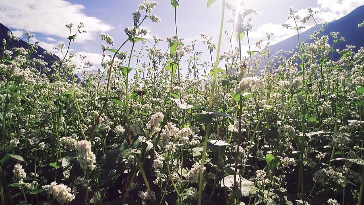 BIOHOF SCHEIRING | Be(e) BIO die ersten Blumen