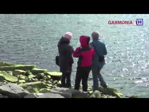 Кандалакшский залив и гренландские тюлени