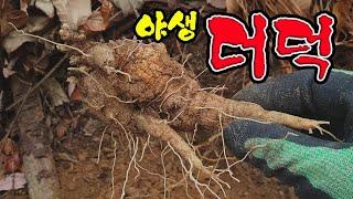 야생더덕산행,더덕 씨뿌리기