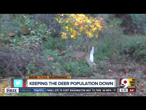 Keeping the deer population down