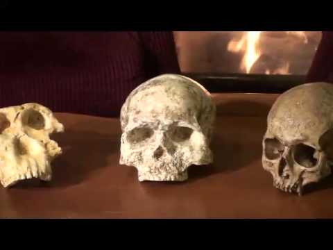 Cro-Magnon, Neanderthal, Australopithecines