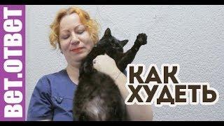 Как правильно кормить стерилизованную кошку? ВетОтвет.