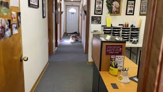 Ruby Lakeland Terrier in the office