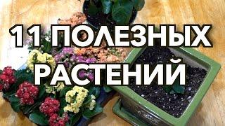 Самые полезные и неприхотливые комнатные растения