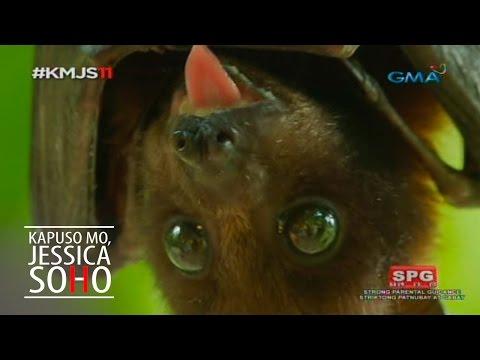 Kapuso Mo, Jessica Soho: Mga Kabug sa Bohol