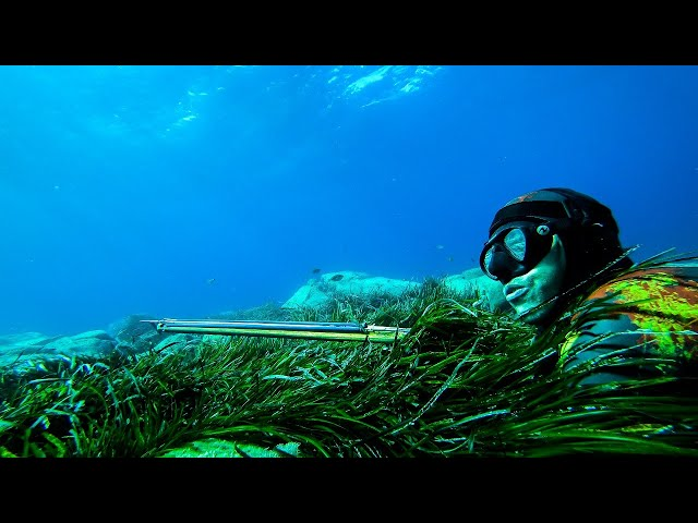 Everyone should watch this Fisherman's video-Catch Only The Fish You Need|Spearfishing Life 🇬🇷
