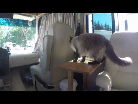 Introducing my cat to my RV