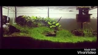 short video from my 54l aquarium