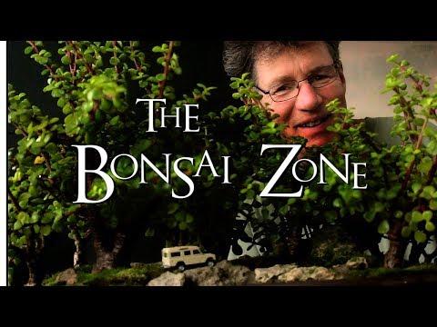 Fall Pruning My Tropical Bonsai, Part 2, Nov 2017