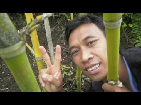 Bamboo Farmer Field School Desa Ban