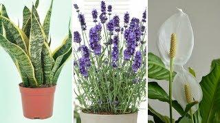 Estas são as 5 plantas que você pode colocar no quarto para poder dormir muito melhor