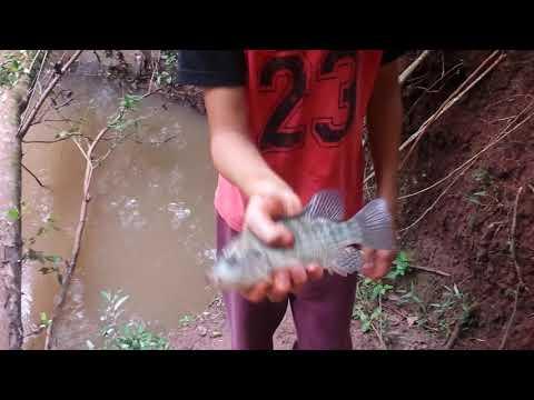 pescando em terra roxa PR(parte 3)