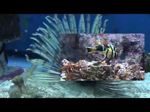 Elmer's Aquarium Store Tour 2017