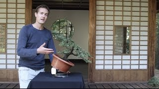 Bonsai Basics; how to grow a Bonsai tree