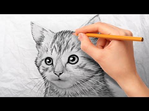 Как нарисовать котенка карандашом поэтапно для начинающих
