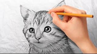 Как нарисовать котенка карандашом поэтапно для начинающих(Хочешь научиться рисовать карандашом? Начни с простого попробуй нарисовать пушистую милашку котика самост..., 2016-09-18T20:49:13.000Z)