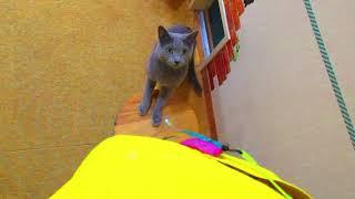 【猫カフェあいきゃっと福島店】みんにゃ大集合の秘密 thumbnail
