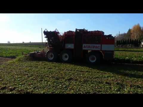 Agrifac WKM HEXA, 2001r, 6-rzędy, Kopanie buraków. (nie holmer, ropa, kleine)