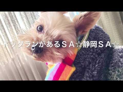 ドッグランがあるSA☆静岡SA☆