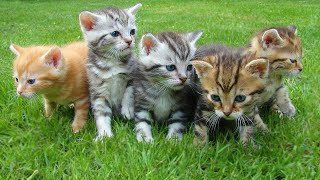Gatos e Cachorros Engraçados ║Tente não Rir
