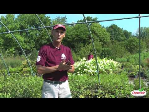 How To Grow Trees And Shrubs From Cuttings And Seedlings