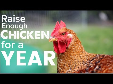 Raising a Years Worth of Meat Chickens to Feed Your Family