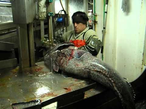 Corte de pescado EXPECTACULAR