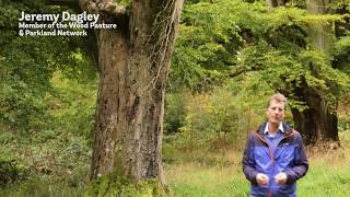 Wildlife and Open Grown trees - Wood Pasture and Parkland Wildlife