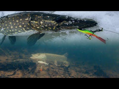 зимняя рыбалка на окуня - 2017-12-02 12:37:17