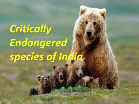 Critically Endangered Species of India