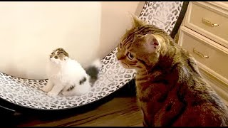 CATS will make you LAUGH YOUR HEAD OFF Funny CAT compilation home zoo