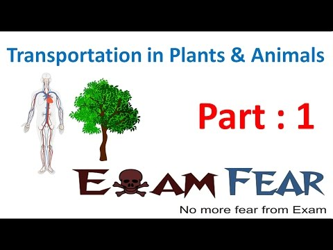 Biology Transport in Plants Animals Part 1 (Introduction) Class 7 VII