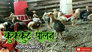 देसी मुर्गी पालन Desi Murgi Palan.. गावरान कोंबडी पालन...2018